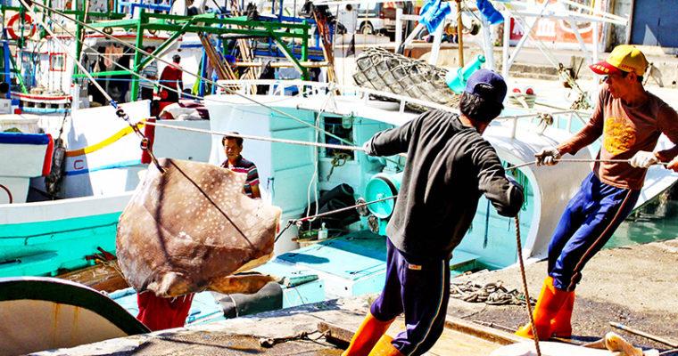 漁港故事:漁市拍賣